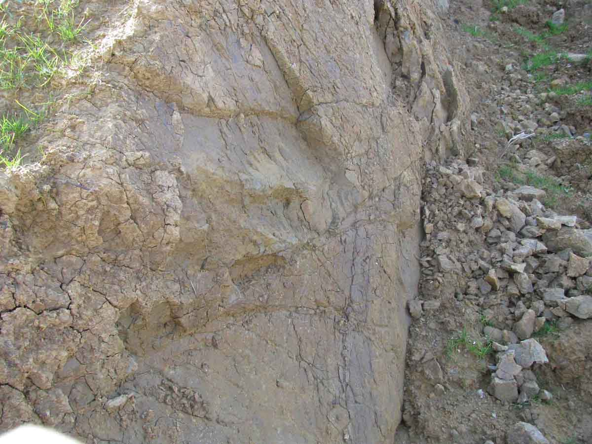 Stiff fissured clay exposed next to a sliding soil mass